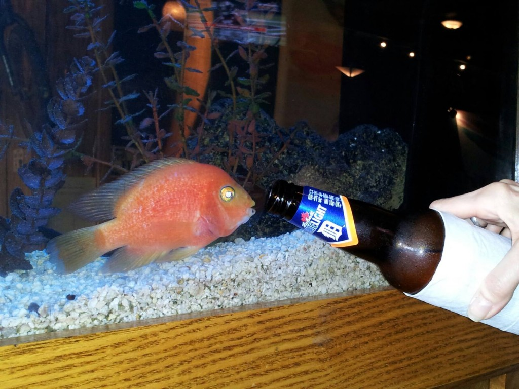 Drink like a fish for Fish and beer